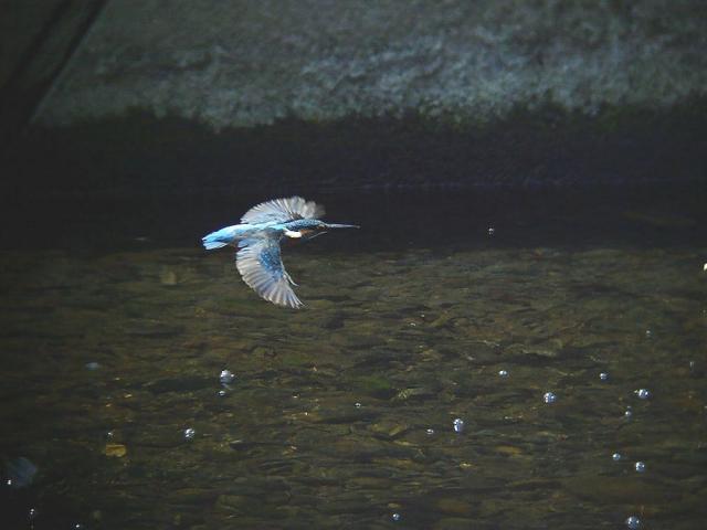 水面を飛ぶ1